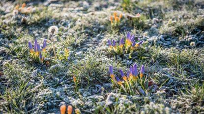 Kouder weer op komst: opletten voor grondvorst volgende week