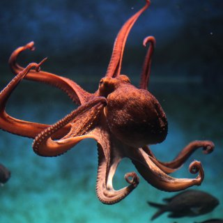 vooruitdenken-de-ideale-pijnstiller-en--drie-wonderlijke-inzichten-uit-onderzoek-naar-inktvissen