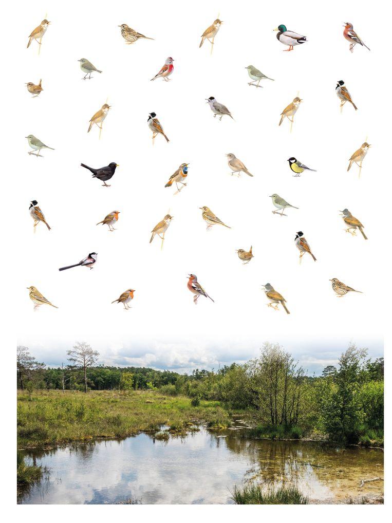 De vogels van het Hoogveen in Zuid-Holland. Beeld Illustratie: Elwin van der Kolk, foto: Wim van der Ende, infographic: Sam Gobin