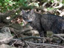 Avondklok voor katten redt veel vogels: 'Hou ze gewoon na 20.00 uur binnen'