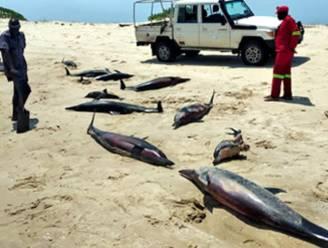 Honderdtal dolfijnen gestorven voor kust van Mozambique, oorzaak blijft voorlopig mysterie