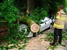 Geparkeerde auto verpletterd door vallende tak