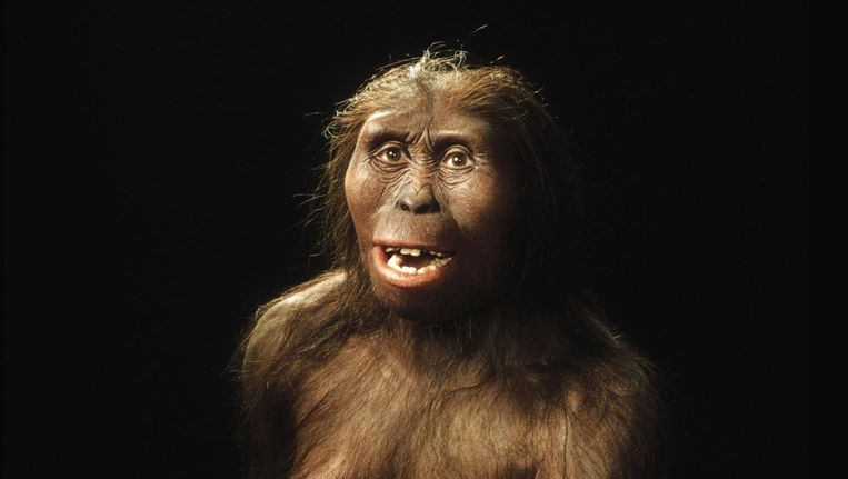 Het uiterlijk van Lucy gereconstrueerd. Deze foto werd in 2006 vrijgegeven door Chicagos Field Museum. Beeld anp