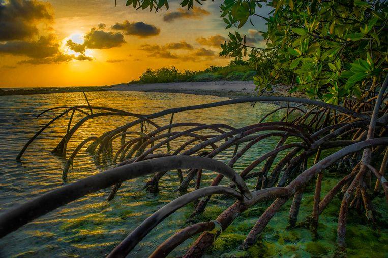 Mangroveplanten vlak bij de oceaan bij zonsondergang.  Beeld Lorenzo Mittiga/INSTITUTE