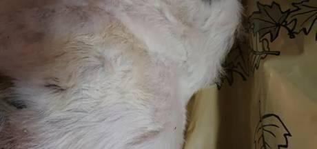 Dode hond gevonden in doos langs de snelweg; wie weet er meer over deze Jack Russell?