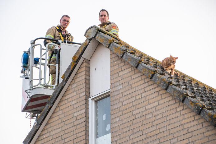 Gelukkig kon Bollie bevrijd worden door de heldhaftige brandweermannen.
