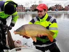 Visclub Etten-Leur: last van Oost-Europese stropers, aalscholvers en droogte