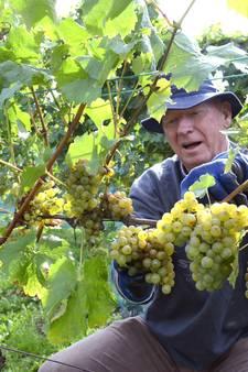 Hele beste wijn, gewoon uit Made