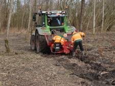 Essentaksterfte duurt nog zeker vijf jaar, Staatsbosbeheer Flevoland plant op grote schaal nieuwe bomen om kaalslag te voorkomen