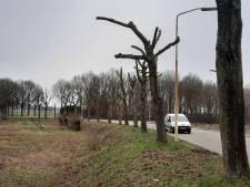 Bomen gesnoeid tot 'kapstok' om later leidingen te verleggen