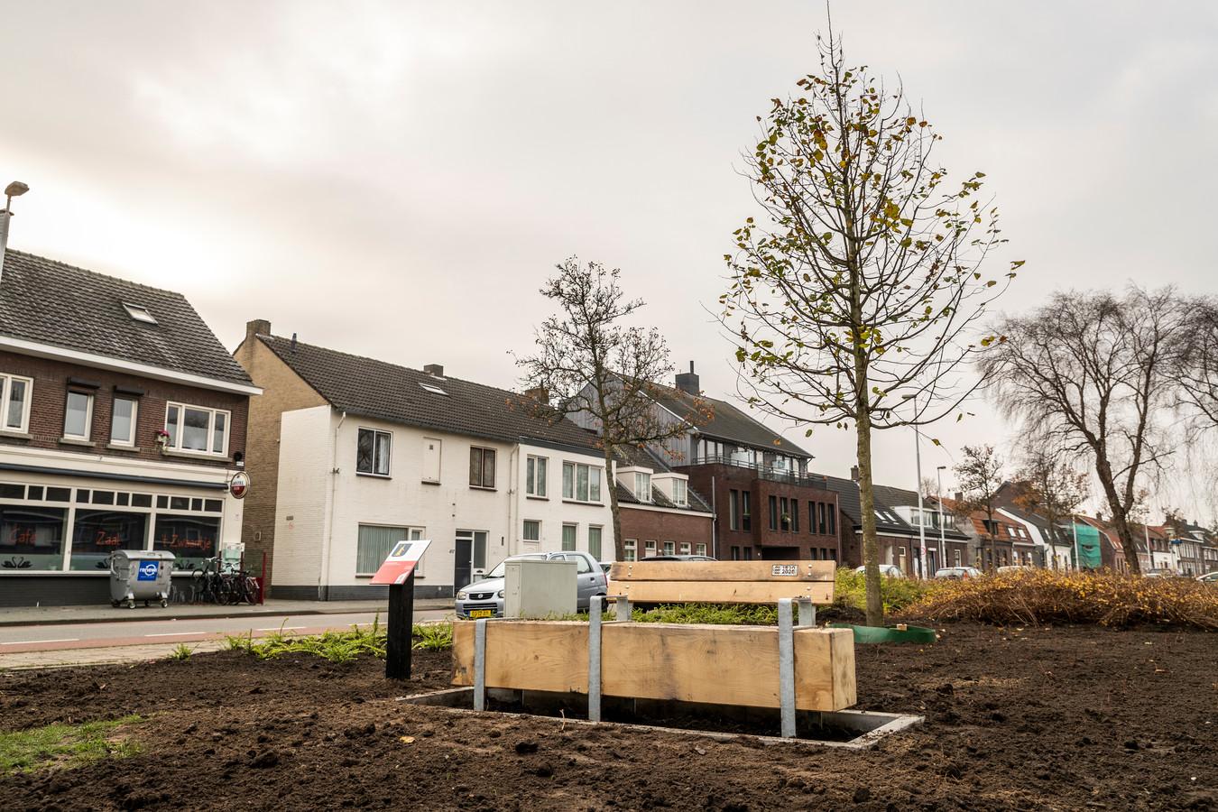 De zomerlinde in het plantsoen tussen Laagstraat en Casellastraat in Gestel is één van de vijf herinneringsbomen.