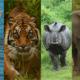 """""""30 procent van Unesco-gebieden bedreigd door handel in wilde dier- en plantensoorten"""""""