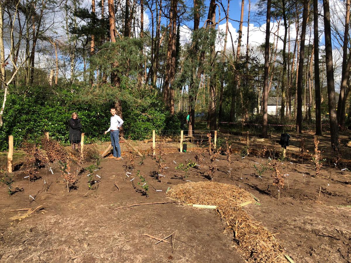 Aanplant 'tiny forest'