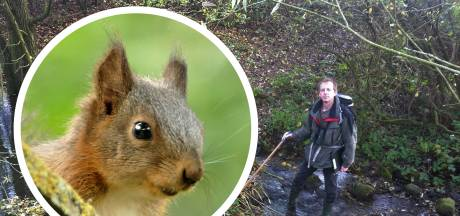 Spot jij ook veel eekhoorns in Twente de laatste tijd? Dat kan kloppen: 'Komt deels door de mens zelf'