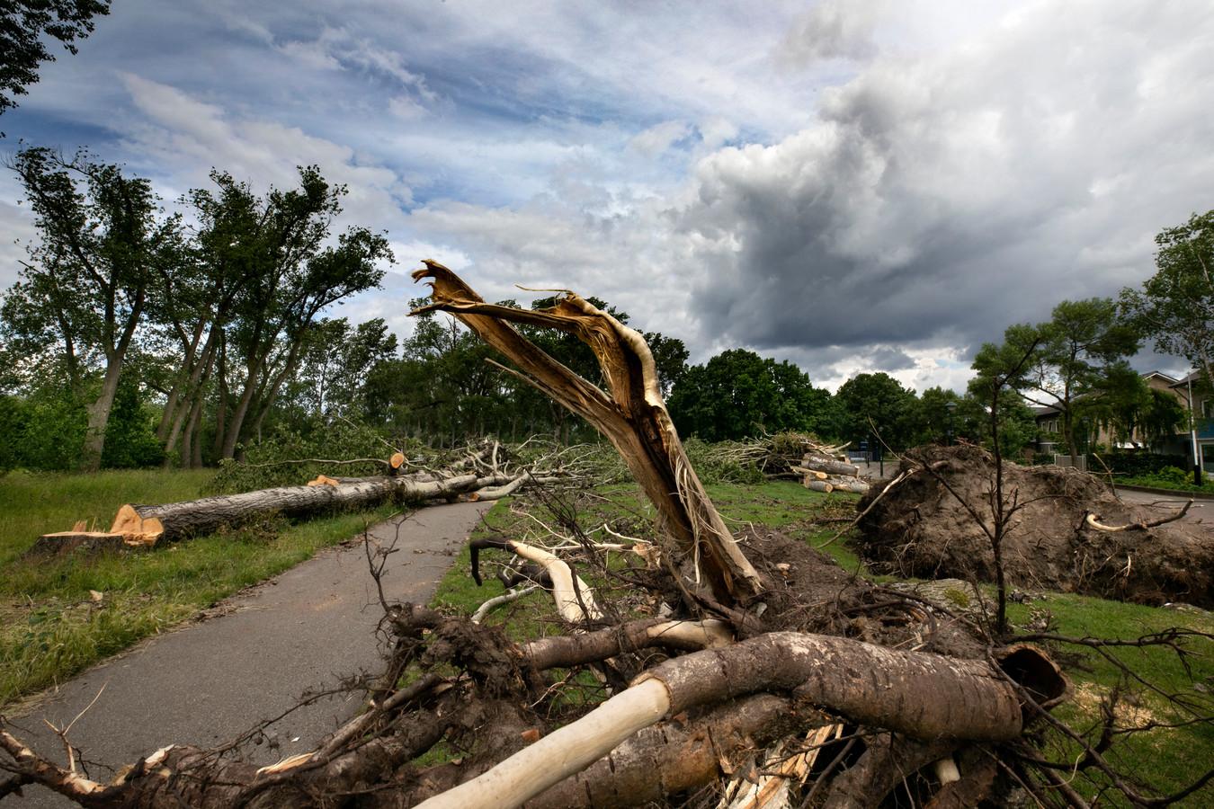 stormschade genneperparken Eindhoven