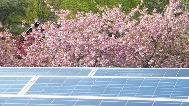 Zonnige tijden voor zonnepanelen: voor het eerst verslaan ze windmolens als het om nieuw vermogen gaat. Beeld Vincent Dekker