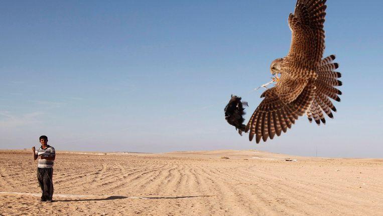 Een bedoeïen in de Sinaï-woestijn Beeld Reuters