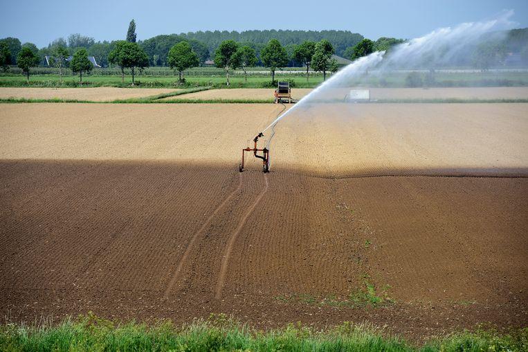 Vanwege de droogte wordt er druk beregend door de boeren.  Beeld Marcel van den Bergh / de Volkskrant