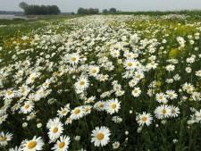 Ondanks de koude lente tonen de bloemen een uitbundig kleurenpalet