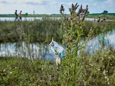 Het stinkt langs de rivieren, en niet vanwege dode vissen en afval na het hoogwater