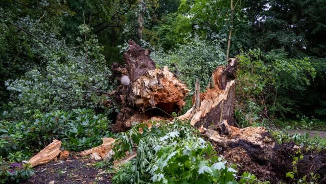 Ziekte velt een van oudste bomen in park in Overmere