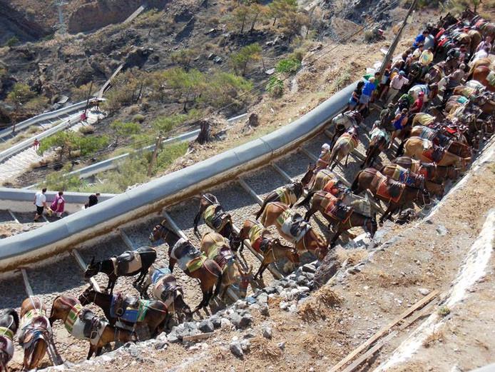 Toeristen laten zich op de steile hellingen graags vervoeren op de rug van de lastdieren.
