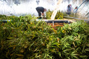 Een wietplantage in Hattem.