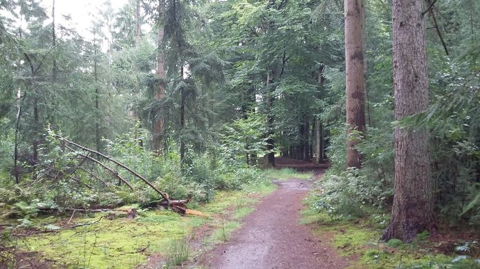 Impressie van het bosgebied van ASRbij Soest.
