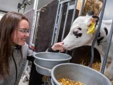 Kalfje Bibian brengt hoop en kracht bij kaasboerderij Schellach