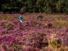 Waarom laten we de boeren de natuurgebieden niet beheren?