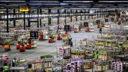 Werknemer vergokt 4,3 miljoen euro van bloemenveiling