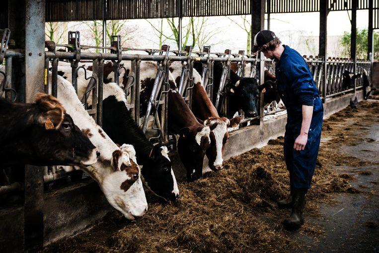 """""""Een klimaatbewuste boerderij ziet er niet per se anders uit dan wat je normaal ziet"""", zegt Mouton. Beeld Geert Braekers"""