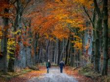 Waarom het tijdens een wandeling wél lukt een goed gesprek te voeren