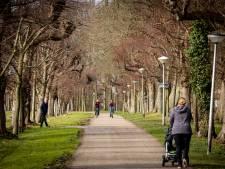 23 bomen moeten gekapt worden langs bekende laan in Vollenhove: 'Heel jammer'