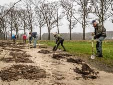 2000e boom geplant in natuurgebied Gijzenrooi; op naar de 30.000