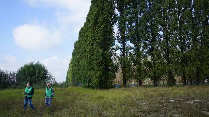 Geen uitstel voor kap van 200 bomen voor PFOS-berm