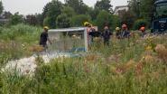 Vlaamse Overheid werkt aan maatregelen om knijtenplaag in Schellebelle in te dijken