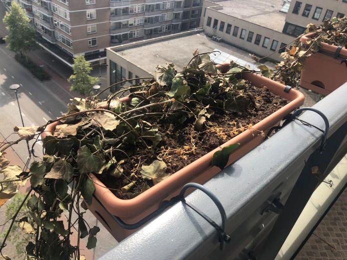 De planten gingen dood of verdorden.