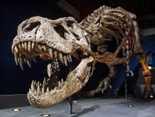 Onderzoek van Naturalis toont aan: T. Rex liep ongeveer even snel als de mens