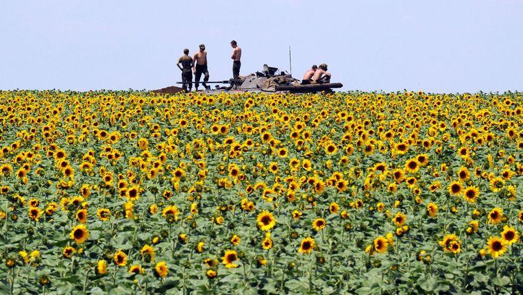 Oekraïense soldaten nemen een pauze tussen de zonnebloemen op 20 km van Donetsk. Beeld AFP