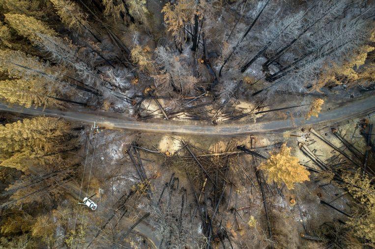 De Creek Fire legde al bijna 120.000 hectare van het Sierra National Forest in de as. Beeld Photo News