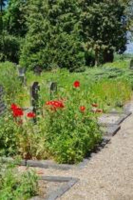 Wilde bloemen op oude verlaten graven: geen verwaarlozing of achterstallig onderhoud