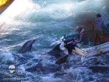 Le calvaire des dauphins de Taiji continue
