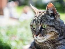 Kattenbezitters in Dronten opgelet: waarschuwing voor dodelijke kattenziekte