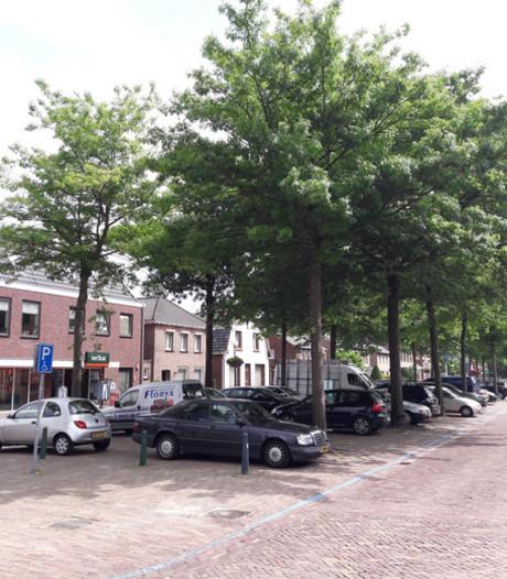 Progressief Bernheze mengt zich in discussie over bomen 't Dorp Heesch