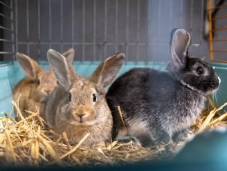 Dierenopvangcentrum dient klacht in tegen onbekenden voor 9 gedumpte konijntjes