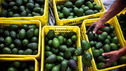 Trump jaagt prijs van avocado's de hoogte in