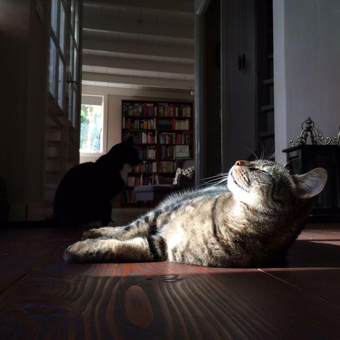 Jolanda maakte een jaar lang elke dag een foto van haar katten.