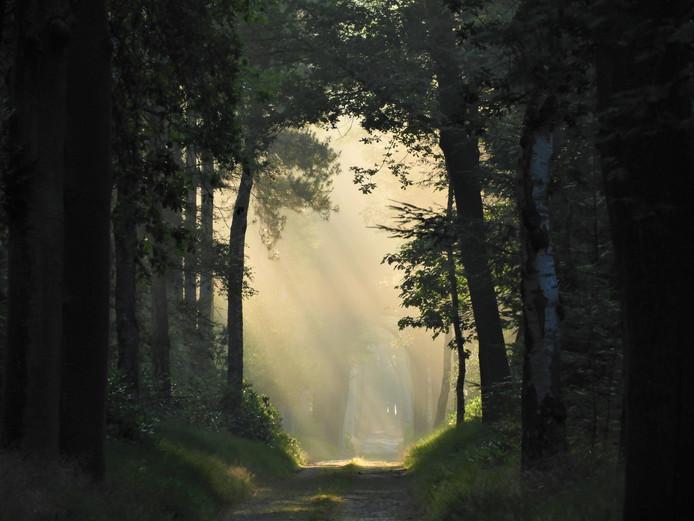 De eerste weekwinnaar van 2017. De stilte en de opkomende zon zorgen voor een prachtige sfeer op een vroege zomerochtend. Anita Stieglis maakte deze foto begin juli in De Groote Meer, een natuurgebied ten oosten van Ossendrecht.