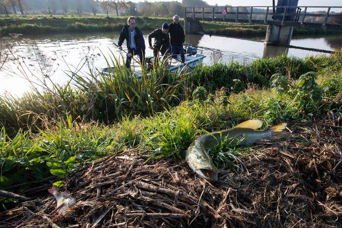Vissers probeerden bij de stuw ter hoogte van de Velhorst de nog levende vissen te redden, op de kant ligt een dode snoek.